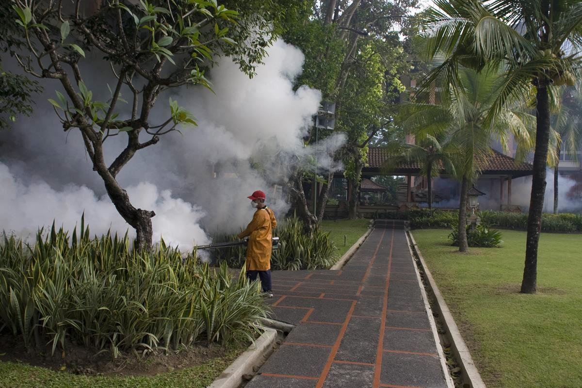 mosquito fogging 1