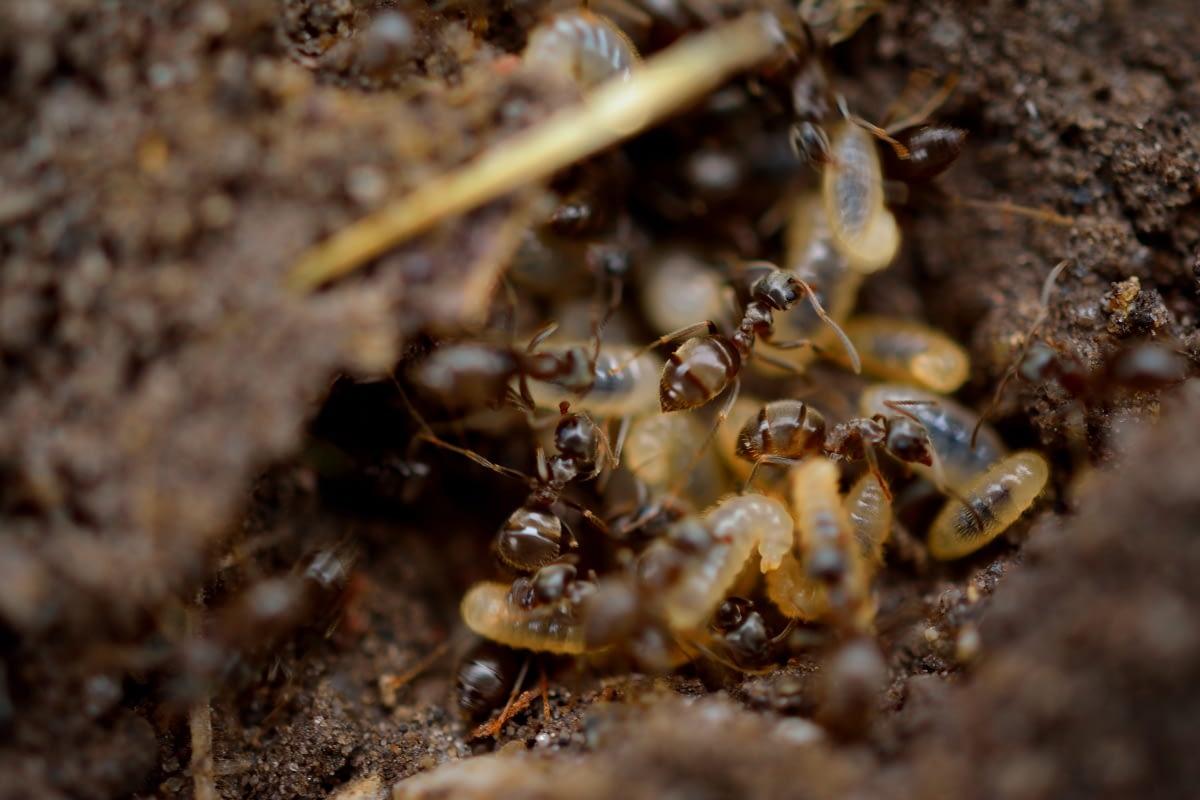 termite control1
